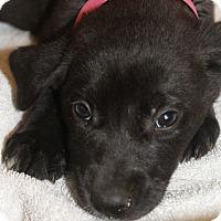 Adopt A Pet :: Susan - Waldorf, MD
