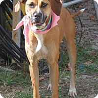 Adopt A Pet :: Chrissy - Morriston, FL