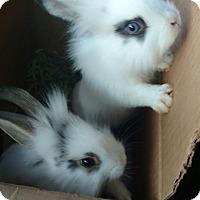 Adopt A Pet :: Skye - Pittsburgh, PA