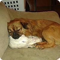 Adopt A Pet :: Griz - Mukwonago, WI