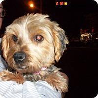 Adopt A Pet :: Spiro - DAYTON, OH