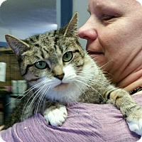 Adopt A Pet :: Cecil - Windsor, CT