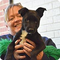 Adopt A Pet :: Barnett - Groton, MA