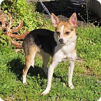 Adopt A Pet :: PRESLEY - Bedminster, NJ