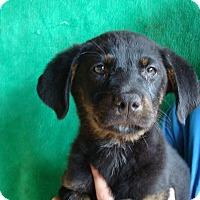 Adopt A Pet :: Tazer - Oviedo, FL