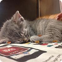 Adopt A Pet :: Tadpole - East Brunswick, NJ