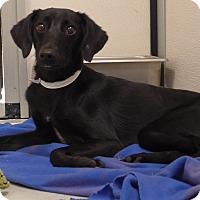 Adopt A Pet :: Jessie - Manning, SC