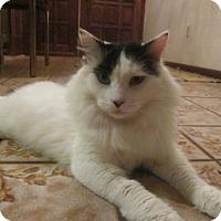 Adopt A Pet :: Shakari - Cerritos, CA