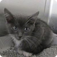 Adopt A Pet :: Kyle - North Richland Hills, TX