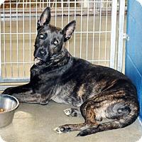 Adopt A Pet :: Venus - San Jacinto, CA