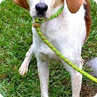 Adopt A Pet :: Paige - Whiteville, NC