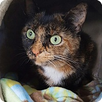 Adopt A Pet :: Zataran - Salisbury, MA