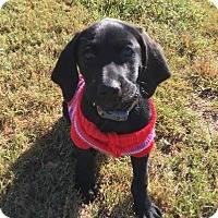 Adopt A Pet :: Buford - Westwood, NJ