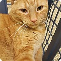 Adopt A Pet :: Pablo - Circleville, OH