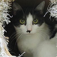 Adopt A Pet :: Eloise - North Hollywood, CA