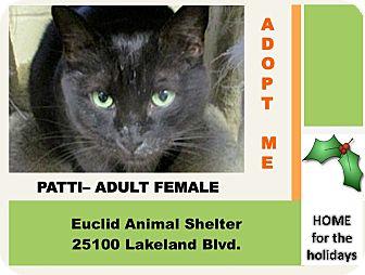 Domestic Shorthair Cat for adoption in Euclid, Ohio - Patti
