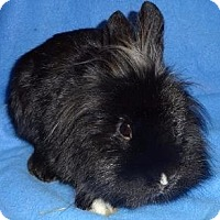 Adopt A Pet :: Binnie - Woburn, MA