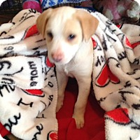 Adopt A Pet :: LESLIE-adoption pending - Cranston, RI