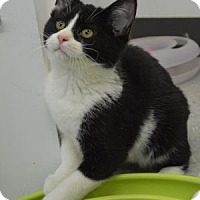 Adopt A Pet :: Ping - Freeport, IL