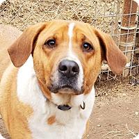 Adopt A Pet :: Polly - Kingston, TN