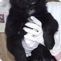 Adopt A Pet :: Kole - East Rockaway, NY