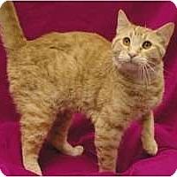 Adopt A Pet :: James - Sacramento, CA