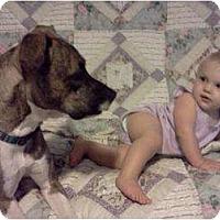Adopt A Pet :: Tipper - Seneca, SC