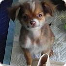Adopt A Pet :: Snap