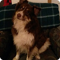 Adopt A Pet :: Bear - Delaware, OH