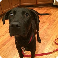 Adopt A Pet :: Collin - Cumming, GA