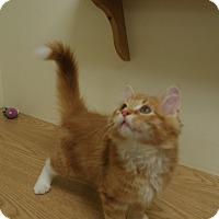 Adopt A Pet :: Vector - Milwaukee, WI