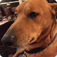 Adopt A Pet :: Lance - Andalusia, PA