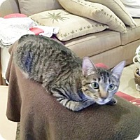 Adopt A Pet :: Charlotte - Arlington/Ft Worth, TX