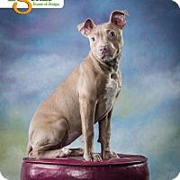 Adopt A Pet :: Leia - Mayer, MN