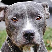 Adopt A Pet :: Skye - WAGONER, OK
