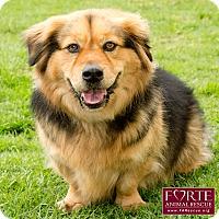 Adopt A Pet :: Buster - Marina del Rey, CA