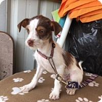 Adopt A Pet :: TRULA - Elk Grove, CA