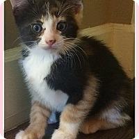 Adopt A Pet :: Helga - Mt. Prospect, IL