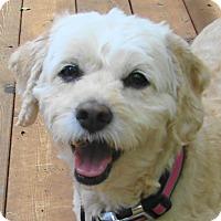 Adopt A Pet :: Daisy - St Louis, MO