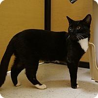 Adopt A Pet :: Curtis - Salem, NH