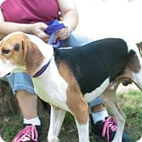 Adopt A Pet :: Schroder - New Martinsville, WV