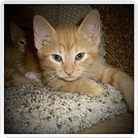 Adopt A Pet :: MOGGY - Medford, WI