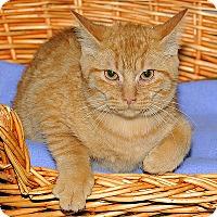 Adopt A Pet :: Annie - Gatineau, QC
