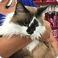 Adopt A Pet :: Tae - Germantown, MD