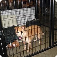 Adopt A Pet :: TERESA - Port Clinton, OH