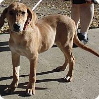 Adopt A Pet :: Nala - Washington court House, OH