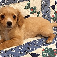 Adopt A Pet :: Percy - Santa Ana, CA