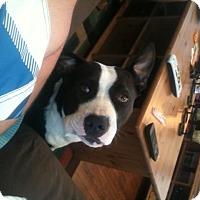 Adopt A Pet :: Luna - Hawthorne, CA