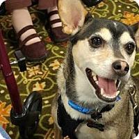 Husky/Terrier (Unknown Type, Medium) Mix Dog for adoption in Nicholasville, Kentucky - Teddy