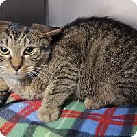 Adopt A Pet :: Derek - Gatineau, QC